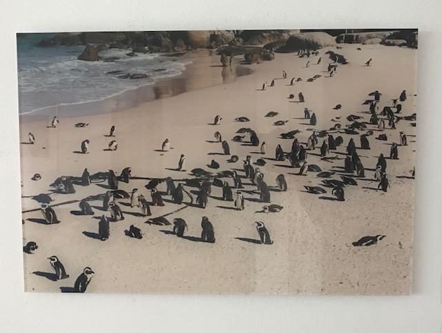 pinguins-saal-digital